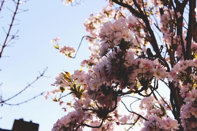 spring's planning (800x533)